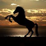 高松宮記念 2020 最終予想【馬場の攻略!傾向に合う馬は?】